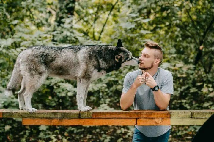 Petco Vs. Petsmart Dog Training