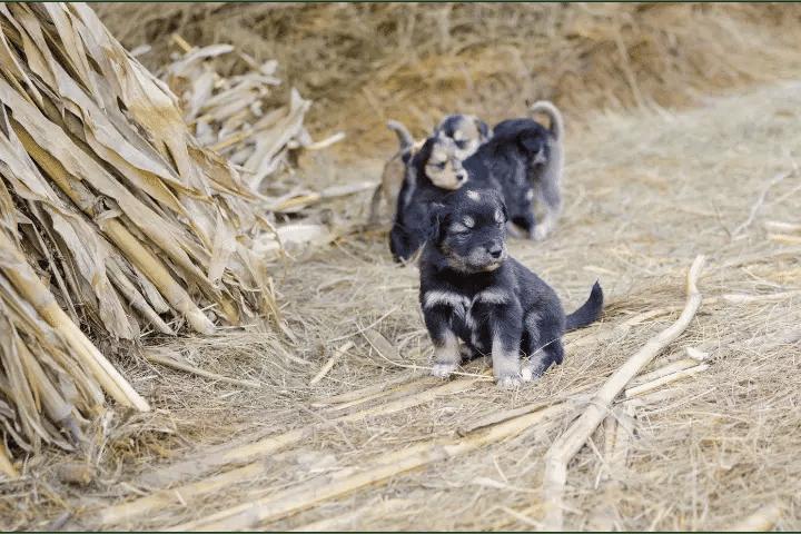 Is Kellys Kennel A Puppy Farm?