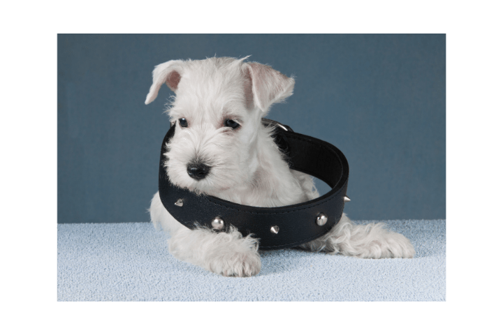 The Best Collar for Puppy in 2021