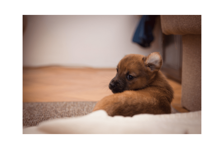 When Can You Leave A Puppy To Go On A Holiday