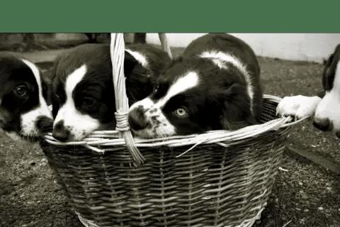 Is Puppy Finder Legit