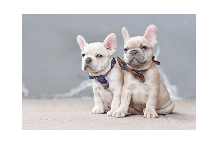 Is It OK To Take A Puppy At 7 Weeks