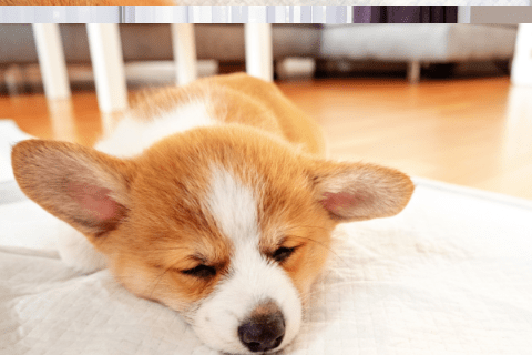 Can You Use Puppy Pads For Humans