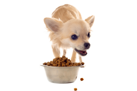 Best Food For Puppy With Rickets