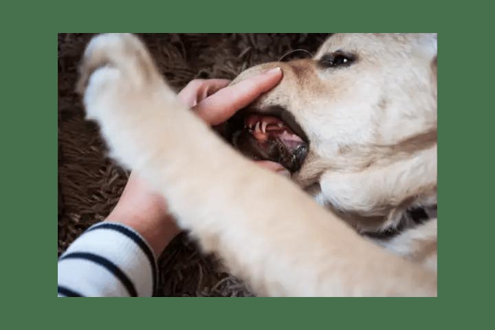 Do Puppy Teeth Turn Black