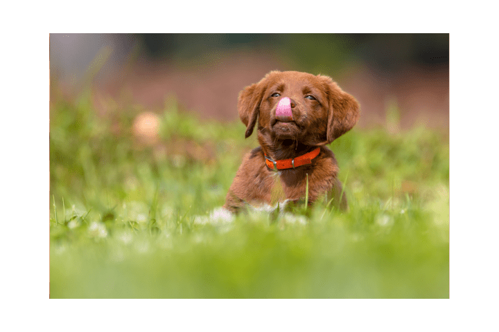 Can A Puppy Break Its Nose