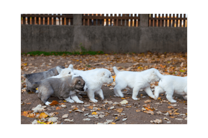What's In A Puppy Pack