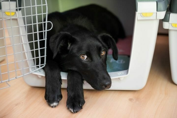 When To Move Puppy Crate Out Of Bedroom