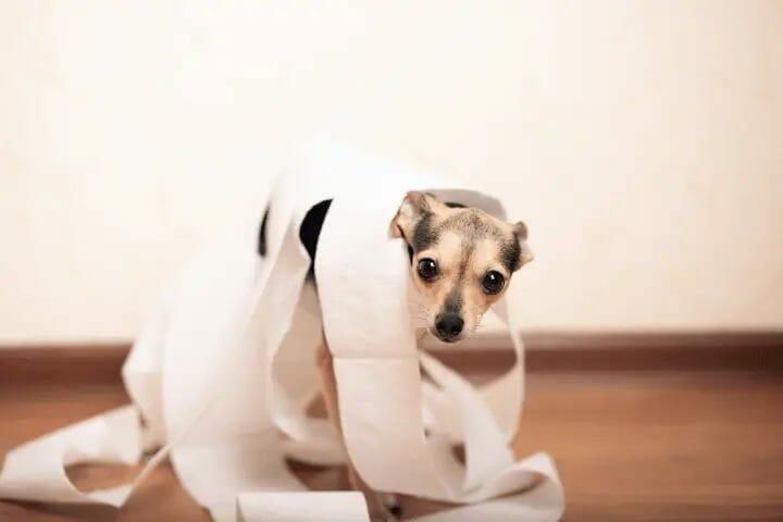 Does Diamond Puppy Food Cause Diarrhea