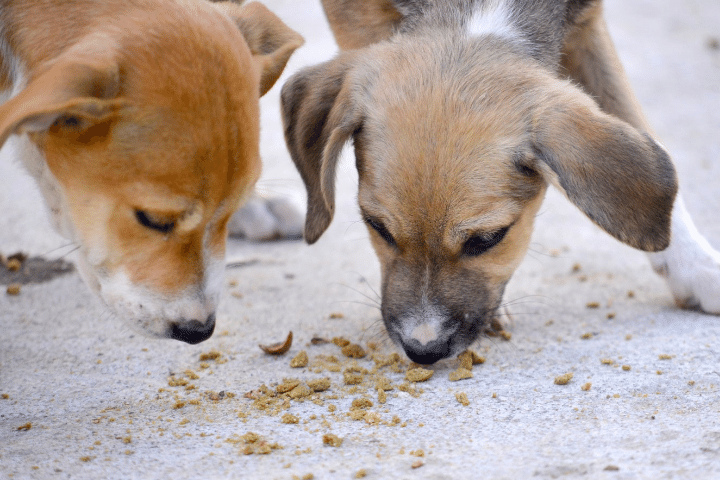 How Long Does A 3Kg Puppy Food Last?