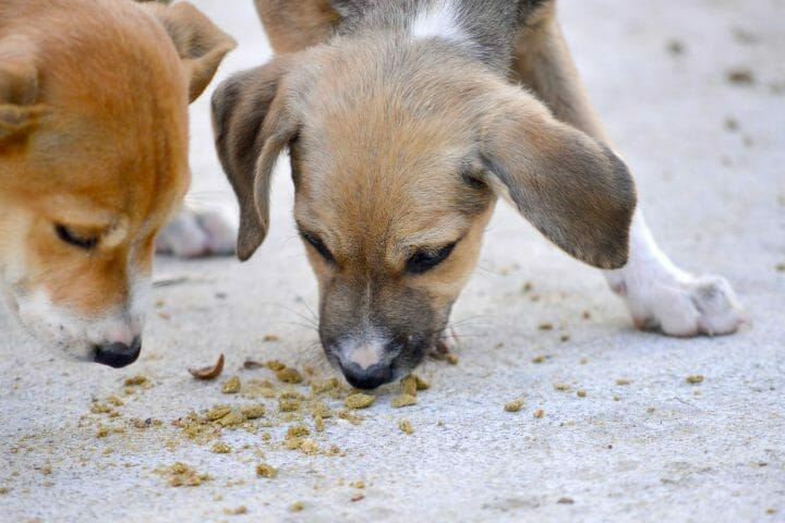 When To Stop Wetting Puppy Food