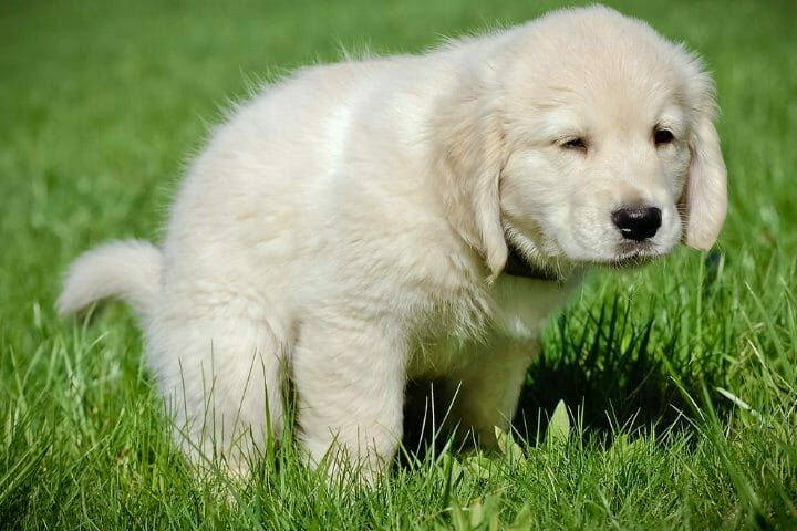 How To Potty Train A Puppy Without Shots
