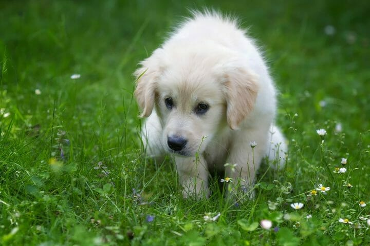 When To Stop Giving Puppy Treats For Potty Training
