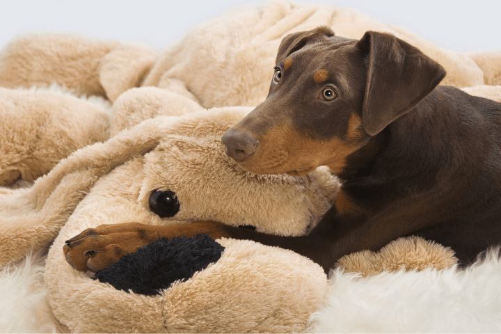 How To Stop My Doberman Puppy From Biting
