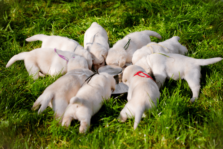 How To Stop Puppy From Eating Mulch