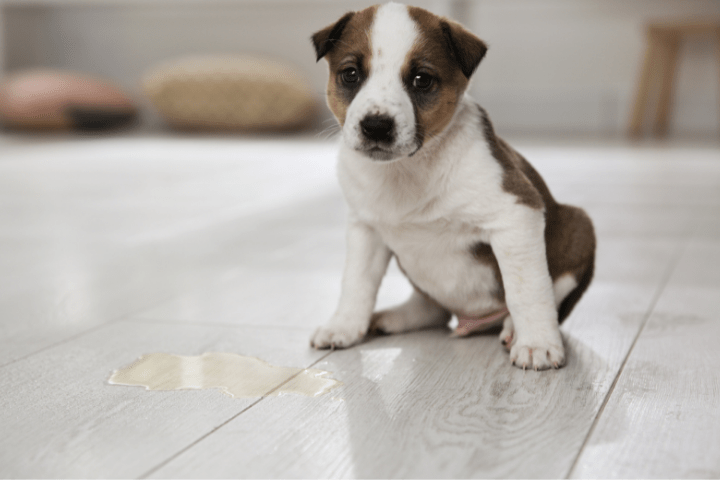 Should You Spank A Puppy When Potty Training