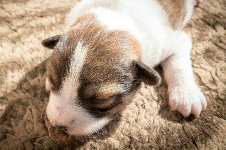 How To Train A Blind And Deaf Puppy To Use The Potty