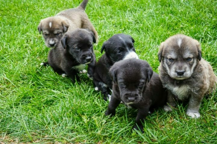 What Is The Biggest Puppy In The Litter Called